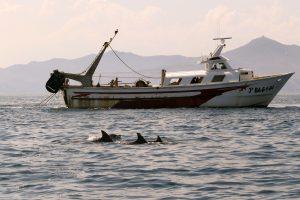 1.tursiops truncatus delfin mular bottlenose dolphin (16)