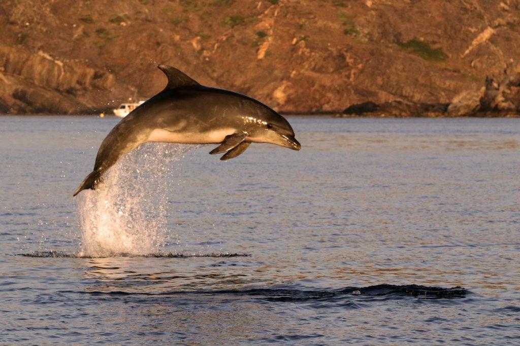 Outreach-bis.Dofins de tramuntana