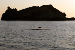 3.Outreach bottlenose dolphin