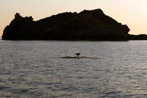 3.Outreach bottlenose dolphin